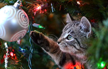 Top 10 Holiday Pet Hazards