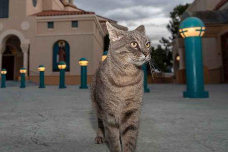 Working-Cat---Kuokla.jpg