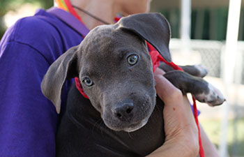 10 Things You Need to Know About Adopting Puppies