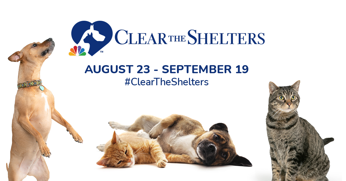 AF - Clear the Shelters Campaign - CTS Twitter Post.jpg