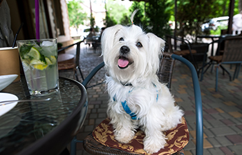 Dog-Friendly Restaurants in Las Vegas