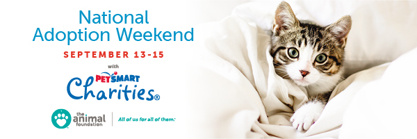 AF - National Adoption Weekend Campaign - Email Banner.jpg