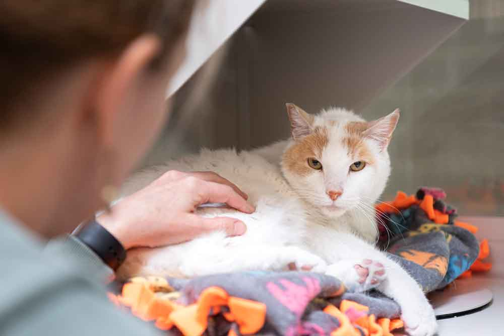 Women-Petting-White-Cat---Cat-Adoption-Blog-Post.jpg