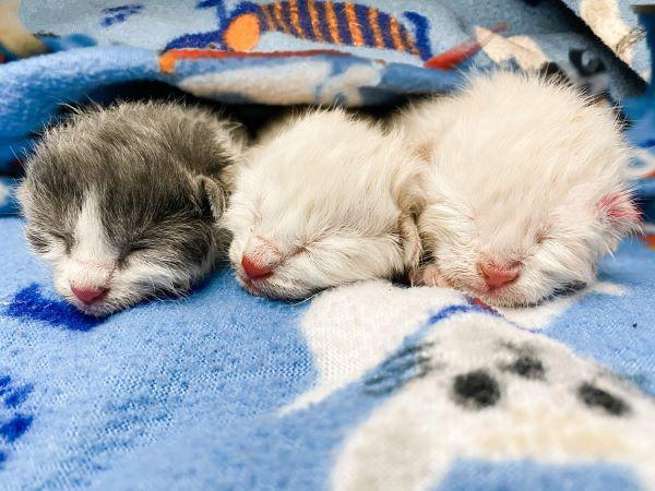 Kitten Nursery 600px.jpg