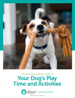 TAF Guide to Your Dog's Play Time and Activities