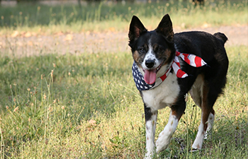 Top 10 Tips for 4th of July Pet Safety
