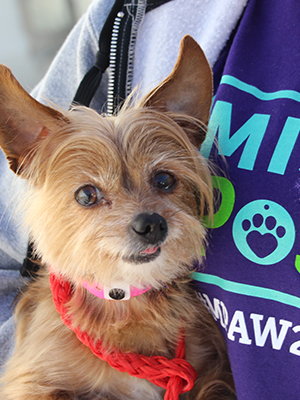 10 Questions to Ask Before You Adopt a Pet | The Animal Foundation