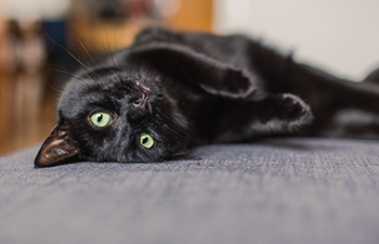 Black Cats: the Good, the Bad, and the Misunderstood