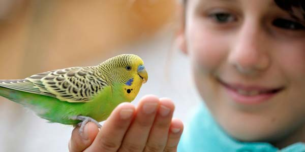 A young girl holds a colorful bird