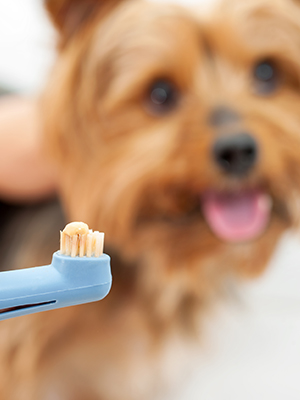 Gum-Disease-in-Dogs.jpg