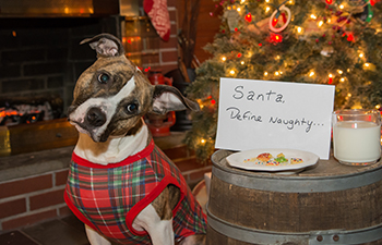 10 Tips for Happy Holidays with Your Pets