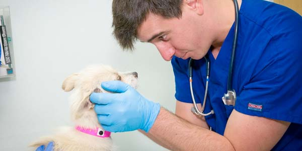 Vet with a young dog